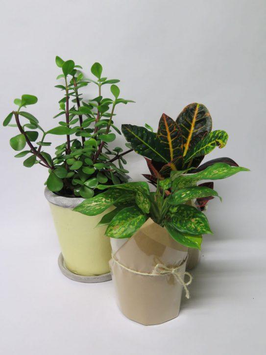 Living Plants